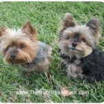 Online Pet Shop: Mr. Chewy Review