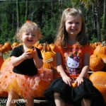 Wordless Wednesday ~ Pumpkin Patch