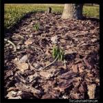 Deer proof plants mondo grass