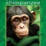 Free Ticket To See Chimpanzee From Disney Movie Rewards