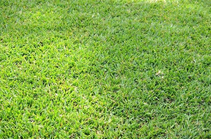 Florida Green Grass St Augustine