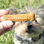 An Easy Way To Brush Dog Teeth – Milk-Bone Brushing Chews