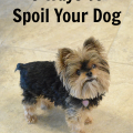 5 Ways To Spoil Your Dog