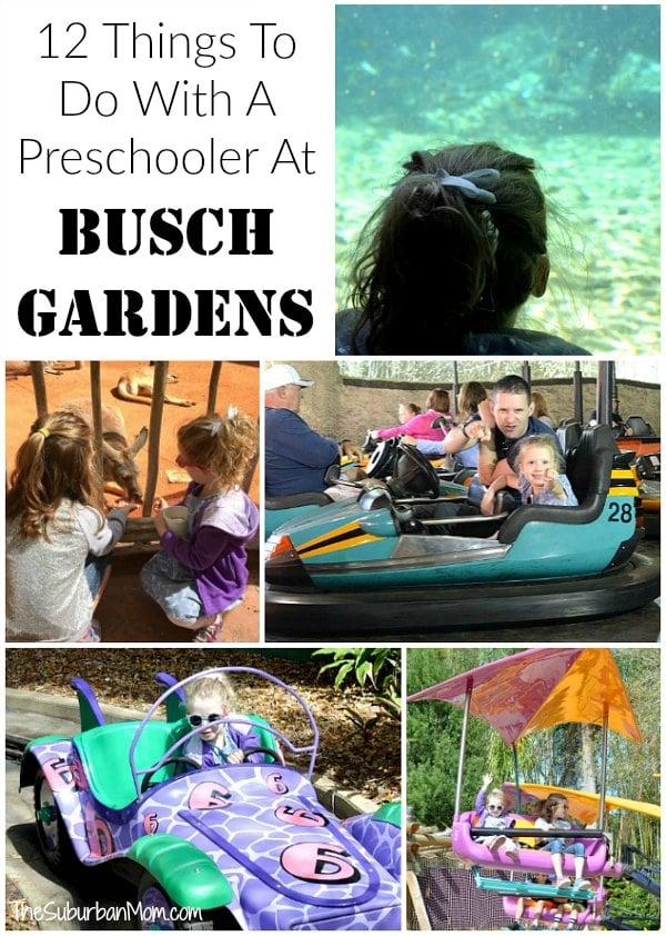 Busch Gardens Preschool Pass Bogo Card And Preschool Pass Return To Busch Gardens 2017