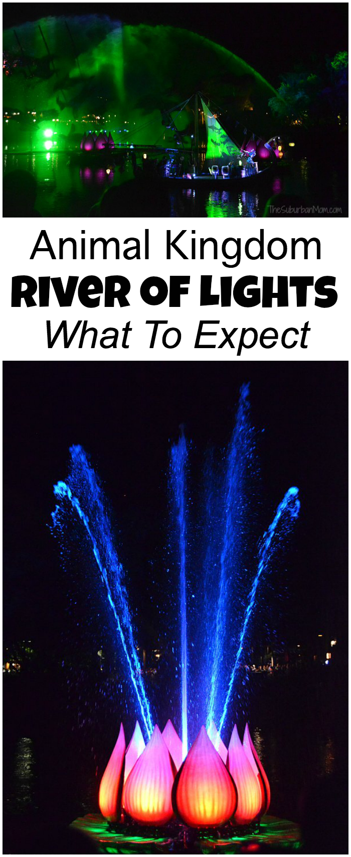 Animal Kingdom River Of Lights