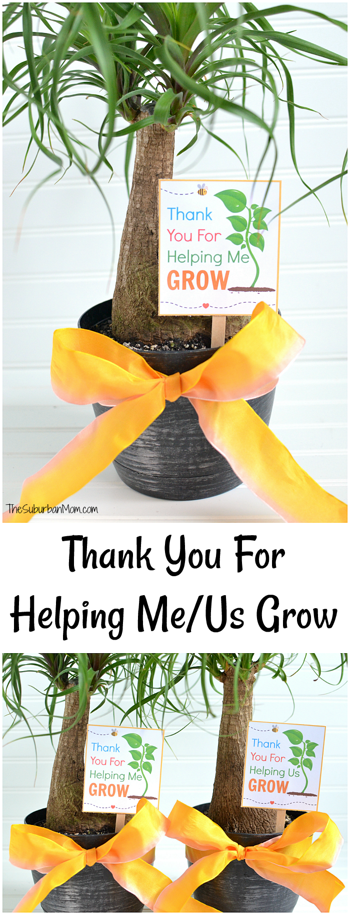 It is a photo of Persnickety Thank You for Helping Us Grow Printable