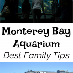 Best Family Tips For The Monterey Bay Aquarium