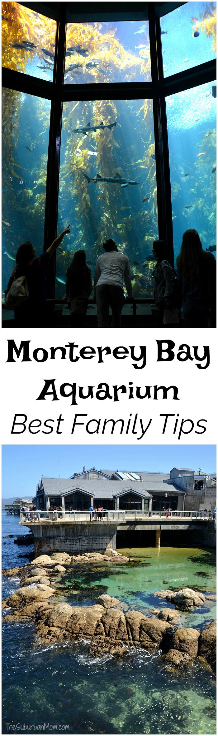 Best Family Tips Monterey Bay Aquarium The Suburban Mom