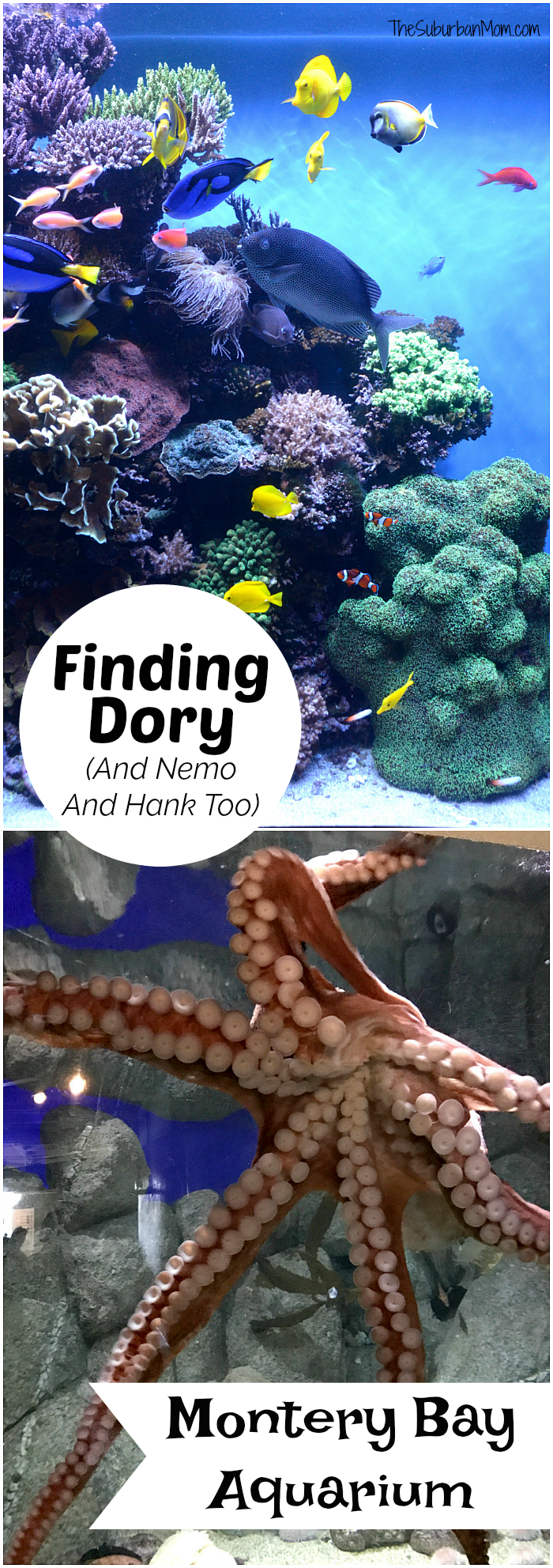 Finding Dory Monterey Bay Aquarium