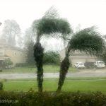 Palm Trees Storm