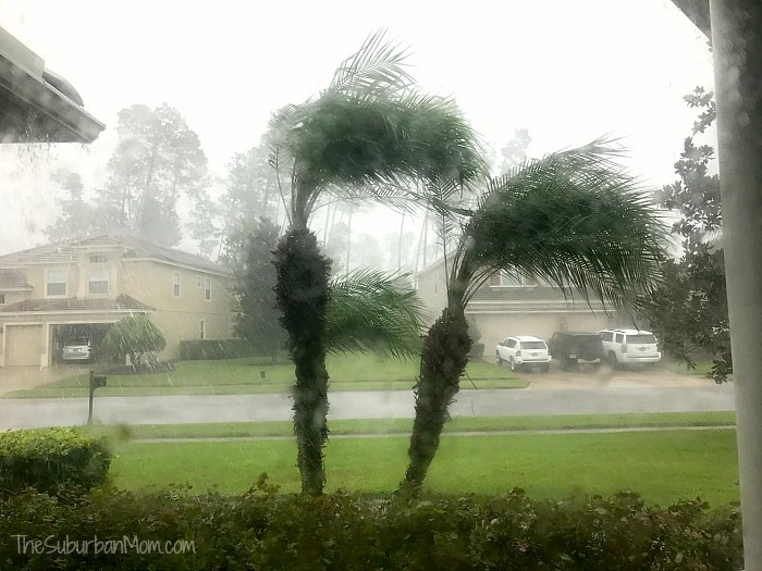 Palm Trees Storm