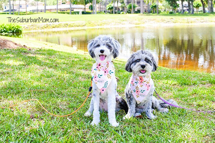 Pet Fashion Dog Bandana Pattern