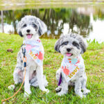 Scout Blu Pet Fashion Bandanas