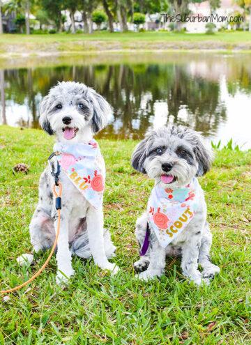 Scout Blu Pet Fashion Bandanas